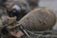 Эхо войны: в Курске найдено три минометные мины